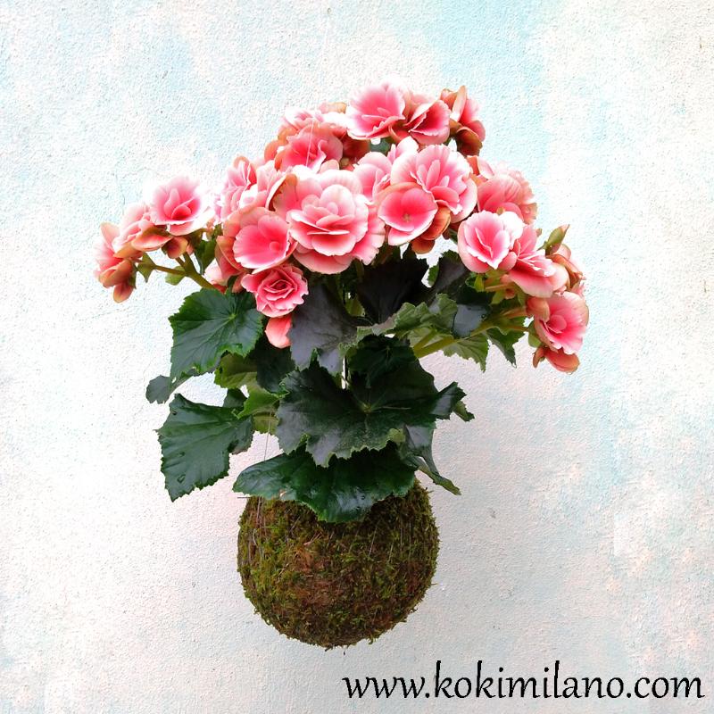 KOKEDAMA-Fiori-Estate,-Summer-Flower-Kokedama,-Flying-Flowers,-Fiori-volanti,-piante-volanti,-giardino-sospeso,-vertical-green