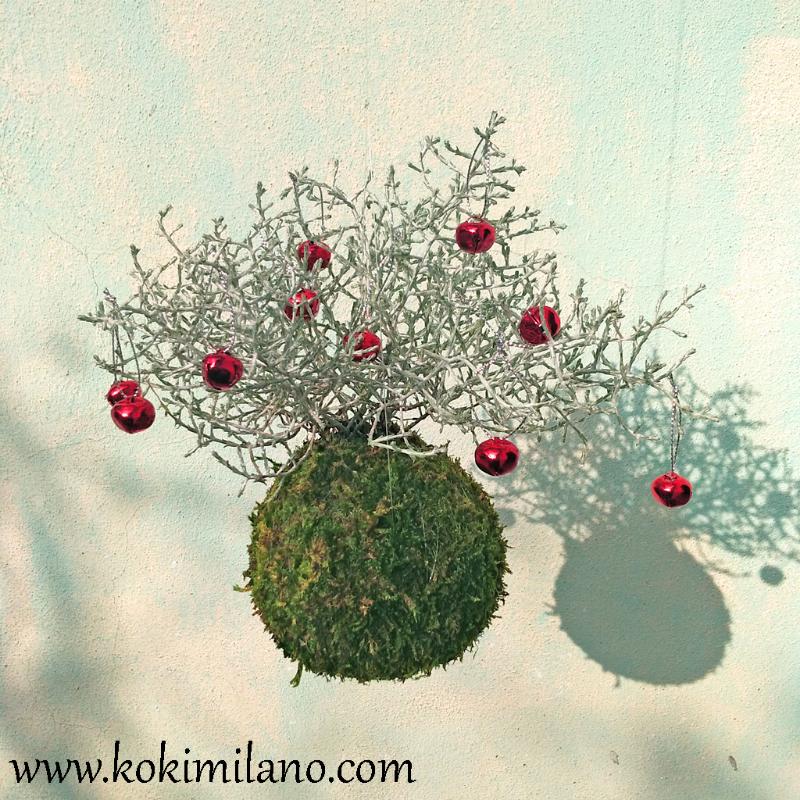 Kokedama-Natale-di-Calocephalus,-Christmass-Kokedama,-Fuori-porta-Natalizio,-Idea-regalo-natale-2018,-Palle-di-muschio-,-Decorazioni,-pianta