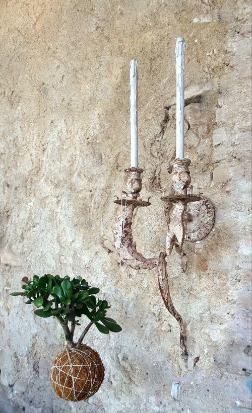 Crassula-ovata-o-Albero-di-Giada