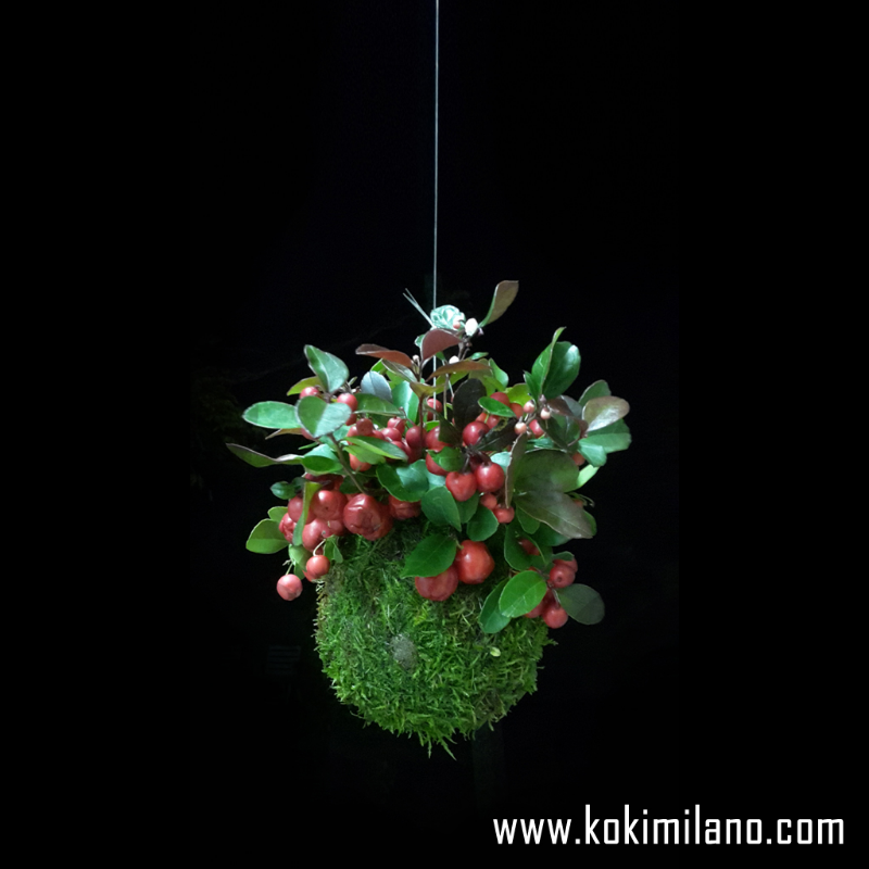 Kokedama-di-Gaultheria,-Kokedama-Natale-,-Centrotavola-natalizio,-bacche-rosse,-regalo-di-Natale,-fuoriporta